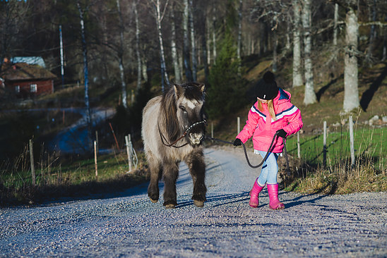 This icelanding horse does not like going uphill