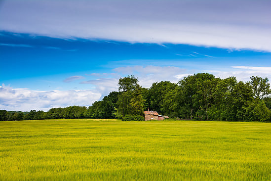 The staturated colours of the early summer in the Swedish countryside